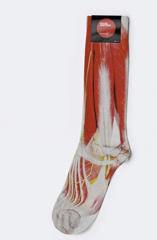 awesome-design-ideas-Socks-anatomy-Anton-Reppone-1